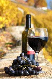 Наслаждаемся вкусом закарпатского натурального вина