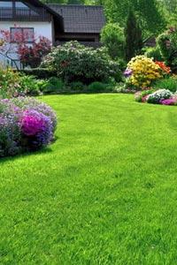 Как создать газон на дачном участке?