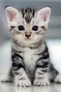 Что нужно купить, если вы релиши завести котенка