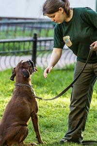 Базовая дрессировка собаки