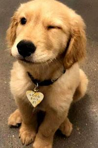 Выбираем сухой корм для собак в магазине Dambo