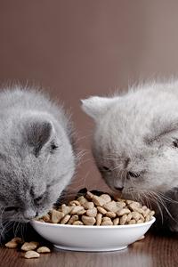 Какой корм выбрать для кошки или кота?