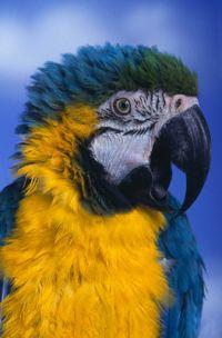 Говорящий попугай под защитой суда