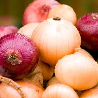 Лук: о пользе «слезоточивого» овоща