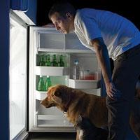 Иерсиниоз — болезнь из холодильника