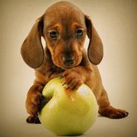 Семь уроков здоровья: учимся у животных