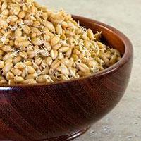 Пророщенные зерна – источник биологически активных веществ