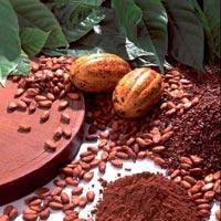 Шоколадный напиток сибаритов: как приготовить полезное какао