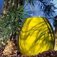 Кедровое масло и его полезные свойства: не только для косметики