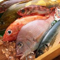 Рыбная диета мам влияет на мозг будущих детей