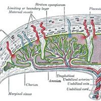 Что происходит с организмом женщины во время беременности