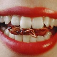 Хитиновая диета: альтернатива вегетарианству и мясоедению - насекомоедение?