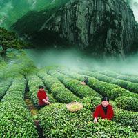 Китайские чайные запреты: благородный напиток только во благо