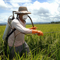 Пестициды бьют ниже пояса