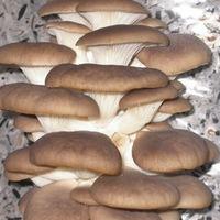 Уникальный гриб рядом с нами