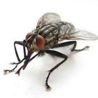 Эти надоедливые насекомые...