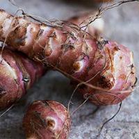 Топинамбур: экзот или повседневный овощ?