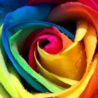 Радуга, розы и магия