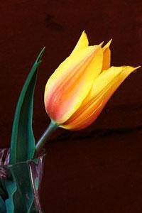 Любовь = Весна