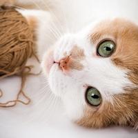 Созерцание фотографий котят и щенков улучшают работоспособность