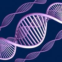 Гены предопределяют судьбу человека