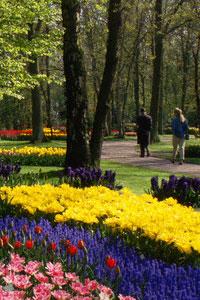 На праздники едем в сказочный парк цветов