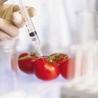 Чего ждать от всемирного эксперимента с ГМО?
