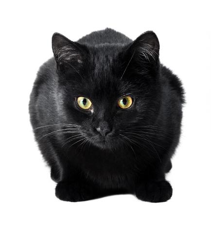 регулярные поглаживания кошки избавят вас от бессонницы