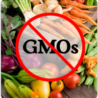 ГМО: в чём польза, в чём вред