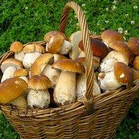 Как проводить чистку лесных и тепличных грибов