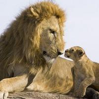 Уроки успеха, которые дают нам... животные