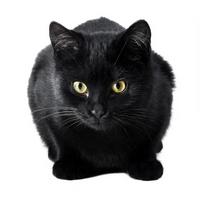 Что значит, если снятся коты или собаки