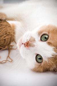 Англичанка заплатила 10 тыс. фунтов за кошачье