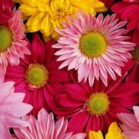 Цветы и тип характера: какие кому дарить?