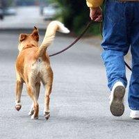Порода собаки и черты характера владельца