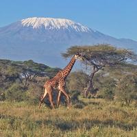 Кения: 5 самых интересных мест, которые нужно посетить