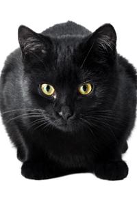 Британца осудили за приучение кота к марихуане