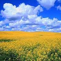Поллиноз: признаки, лечение, календарь цветения аллергенных растений