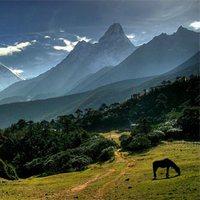 Отпустите меня в Гималаи