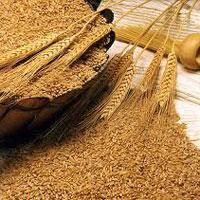 Пшеничные и овсяные отруби: в чём польза и как их употреблять