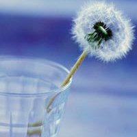 Вода увеличивает мозговую активность