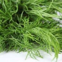 Как сушить и хранить пряные травы