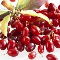 Как используют плоды барбариса в кулинарии и народной медицине
