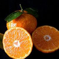 6 продуктів, які активізують синтез колагену в організмі