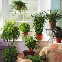 Ученые доказали: комнатные растения чистят воздух