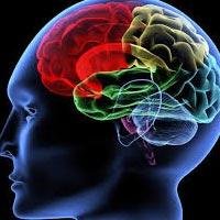 Ученые доказали, что умными рождаются
