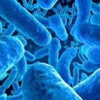 Бактерии в кишечнике предскажут рак