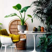 6 растений, которые сделают воздух дома лучше