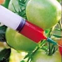 Ученые выступают в защиту ГМО