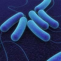 Пробиотики предотвращают ожирение